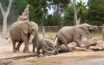 elephant9362z.jpg