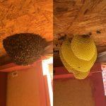 Open hive 2.jpg
